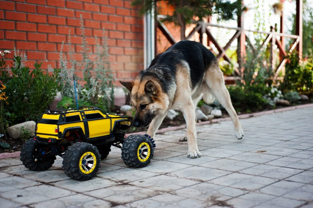 An RC car and a dog